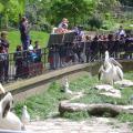 05-London_Zoo
